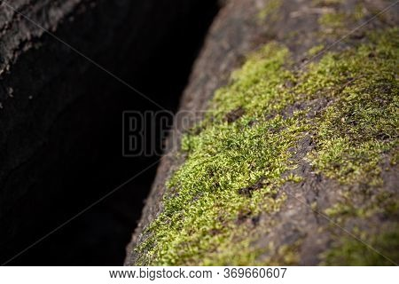 Beautiful Green Moss On The Tree Trunk, Moss Close Up, Macro. Beautiful Background Of Moss For Wallp