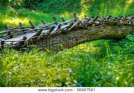 Tree trunk bridge