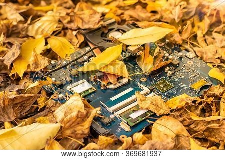 Computer Motherboard Lying On The Street In The Autumn Yellow Fallen Leaves