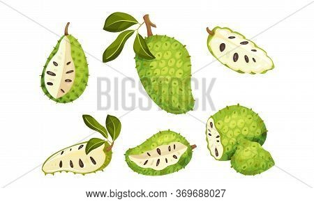 Soursop Fruit Or Guanabana With Dark Green Rind Covered With Thick Thorns Vector Set
