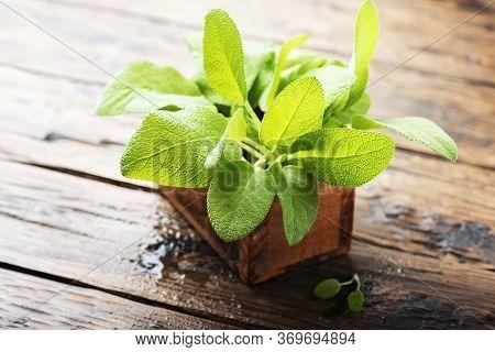 Salvia Officinalis. Sage Leaves On Old Wooden Table. Garden Sage. - Selective Focus Image