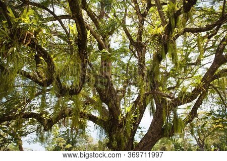 A View Of A Tree With Twining, Hanging, Bright Green Leaves Of Grass In The Contoured Light Of The S