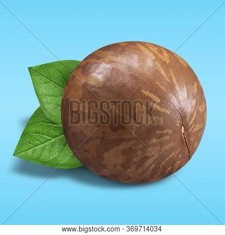 Macadamia Nut Unpeeled On Pastel Blue Background. Closeup One Macadamia Nut In Shell With Green Leav