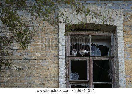 Broken Window Of Ruined House With Two Birds