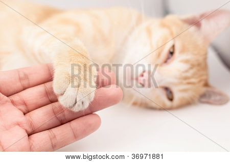 Friendship between man and cat on white background poster