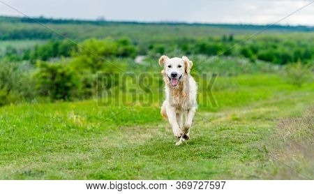 Happy dog running on juicy green spring nature