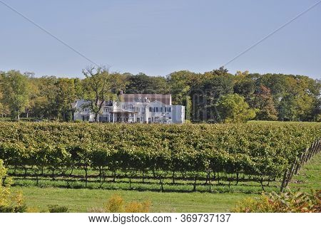 Niagara-on-the Lake, Ontario / Canada - 10/12/2008: A Winery With Restaurant Peeks Over Rows Of Grap