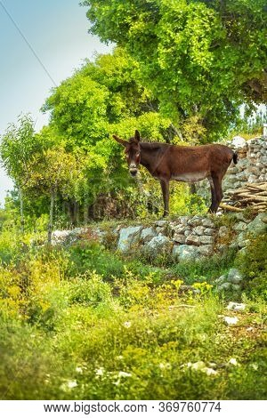 Beautiful donkey stands among fresh green nature, grass-fed graze, nice domestic burro in the countryside, livestock on the farm