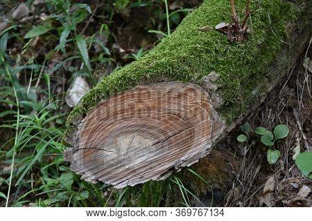 Green Moss On Fallen Tree In Forest