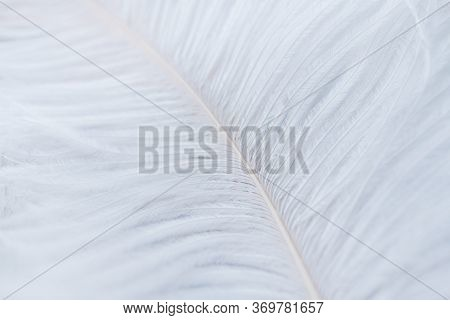 White Feather Texture Background. Top View. High Quality Photo.