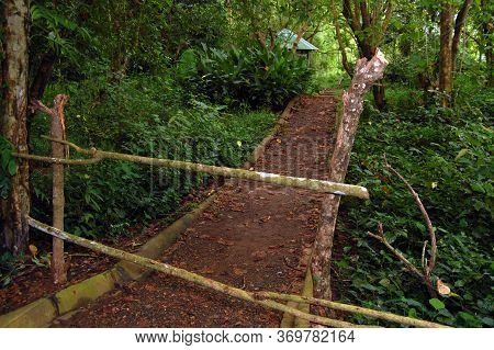 Pathway At The Forest In Puerto Princesa, Palawan, Philippines