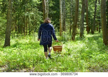 Middle-aged Woman With A Basket Walks In Summer Forest Looking For Mushrooms And Berries. Hiking In