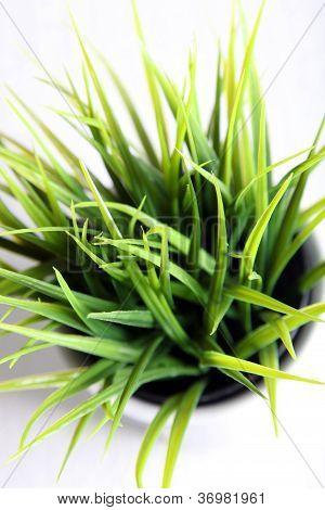Grass Growing In A Pot