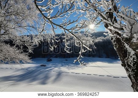 frost on branch and trees in winter landscape of Sicily tourism outdoor activity