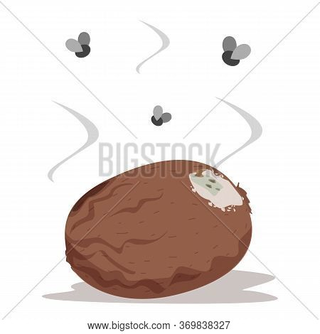 Rotten Kiwi Vector Isolated. Insects Flying Around