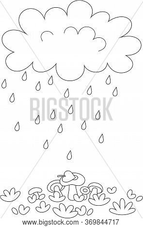 Funny Plump Rain Cloud With Dripping Raindrops Pouring Mushrooms On A Forest Glade On A Rainy Summer