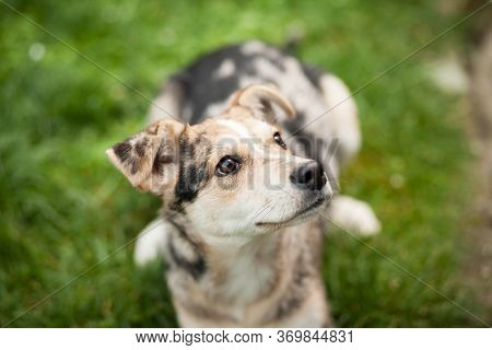 Young Brown Mix-dog Lying On The Grass At Huge Garden, Mammal, Animal Concept