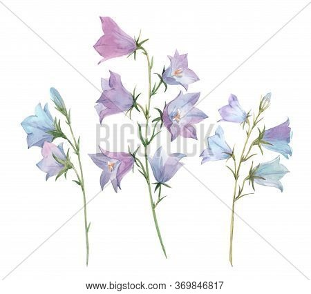 Beautiful Image With Watercolor Gentle Bluebell Flowers. Stock Illustration.