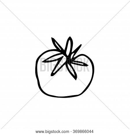 One Vector Tomato With Hand Drawn Clip Art. Black Gardening Illustration Line Art On A White Isolate