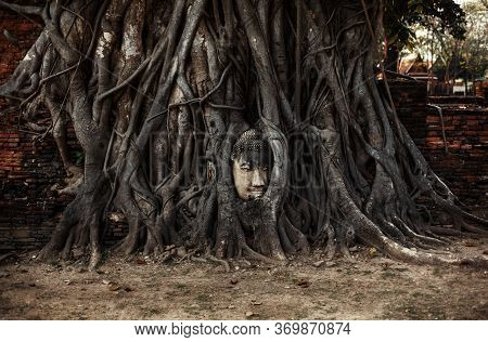 Ancient Buddah Head Between The Tree Roots