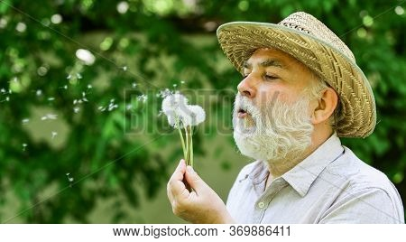Lonely Grandpa Blowing Dandelion Seeds In Park. Mental Health. Tranquility And Serenity. Harmony Of