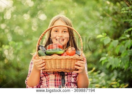 Gmo Free. Kid Gathering Vegetables Nature Background. Eco Farming. Girl Cute Smiling Child Living He