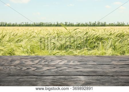 Wooden Table Against Barley Field. Mock Up