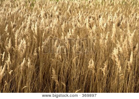 Bereich der braun Gras