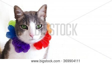 A Cat On Vacation In A Hawaiian Lei (garland) On White Background. Banner. Space For Text. Summer Ho