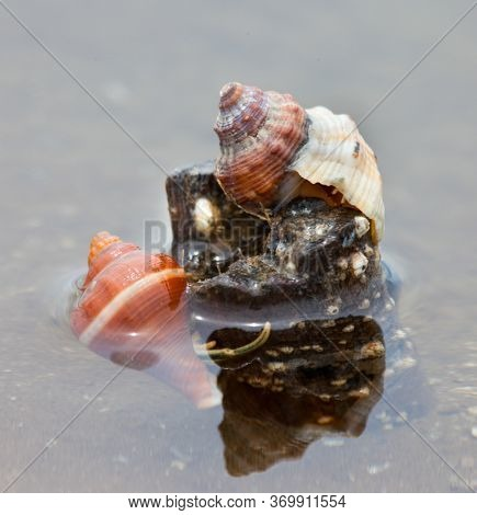 The Shells Of Crustaceans And Corals In A Petrified Tree Trunk In The Sea Water. Selective Focus. Wi