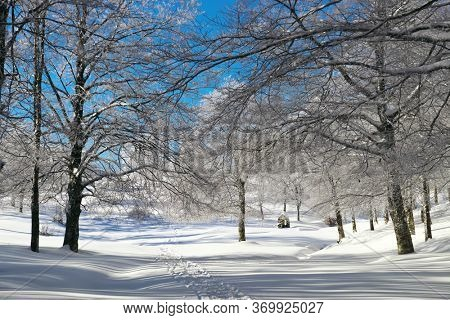 winter forest in mountains of Sicily tourism outdoor activity