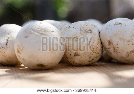 Champignon Mushrooms Lie On A Wooden Surface. White Mushroom Champignon