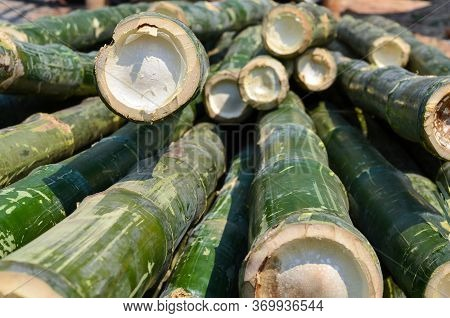 Cutted Bamboo Trees.trunks Of Bamboo Closeup.