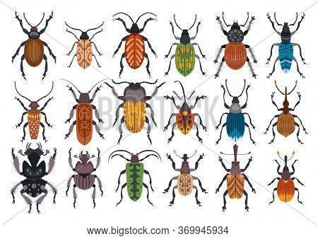 Set Of Beetles Isolated On White Background
