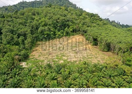 Aerial photo of former rainforest cut down for palm oil industry