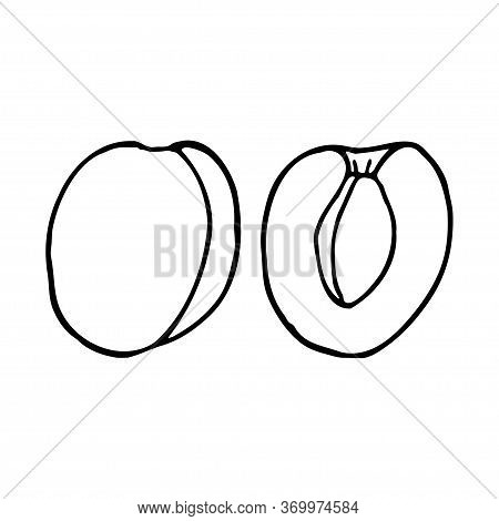 Apricot With Kernel. Hand Drawn Outline Doodle Icon. Transparent Isolated On White Background. Vecto