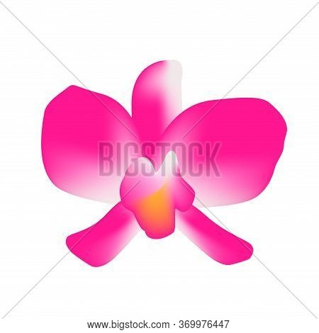 Orchid Flower Single Isolated On White, Petals Orchid Purple For Clip Art, Illustration Orchid Pink,