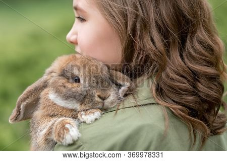 Cute Red Haired Domestic Rabbit. Fluffy Animal Lies On The Girl's Shoulder. Pet Care Concept