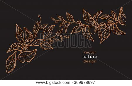 Vector Art Line Nature. Floral Plant, Hand Drawing Graphic Illustration. Botany Tea Branch, Leaf, Fl