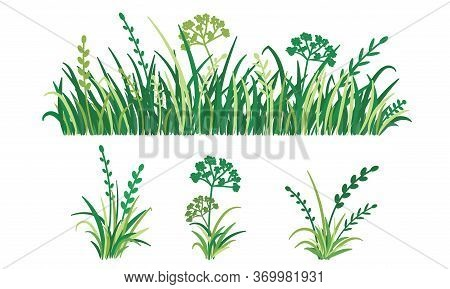 Green Grass Isolated On White Background, Vector Illustration. Spring Greenery Herb Plant. Horizonta