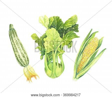 Set Of Fresh Green Vegetables Isolated On White Background. Zucchini, Cabbage Kohlrabi, Corncob With