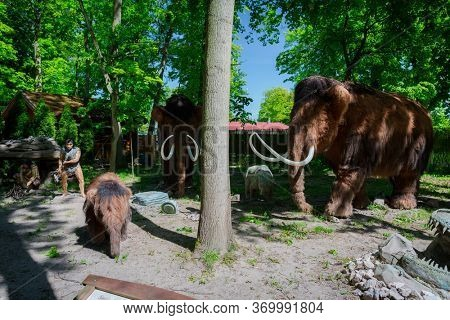 Malbork, Poland - June 1, 2020: Realistic mammoths at the Dino Park in Malbork, Poland. Dino Park is a tourist attraction with moving dinosaurs and dragons.