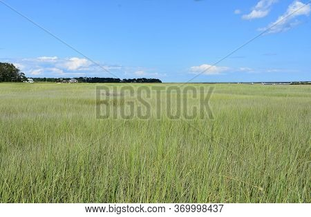 Stunning Field Of A Grass In A Tidal Flat And Tidal Marsh.