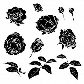 Black Silhouette Roses With Leaves And Buds Set. Simple Flat Delicate Garden Flowers For Logo Or Gre