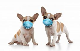 Sitting Puppy Dogs Wearing PPE Mask