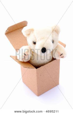 Teddy Bear In Box