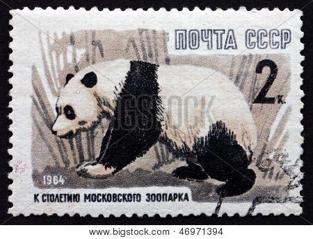 Postage Stamp Russia 1964 Giant Panda, Animal