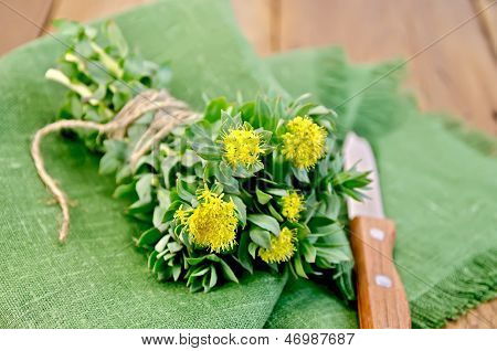 Rhodiola rosea flowers tied with twine a knife on a green napkin on a background of wooden boards poster