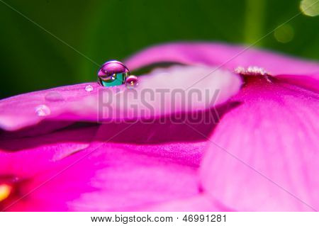 Water Drops On A Pink Flower
