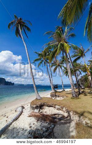 Perfect Palm Beach